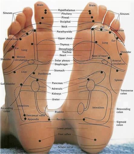 hsfootcircleschart